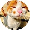 bytebuffer-java微信开发框架-java数组转list - 阿里云